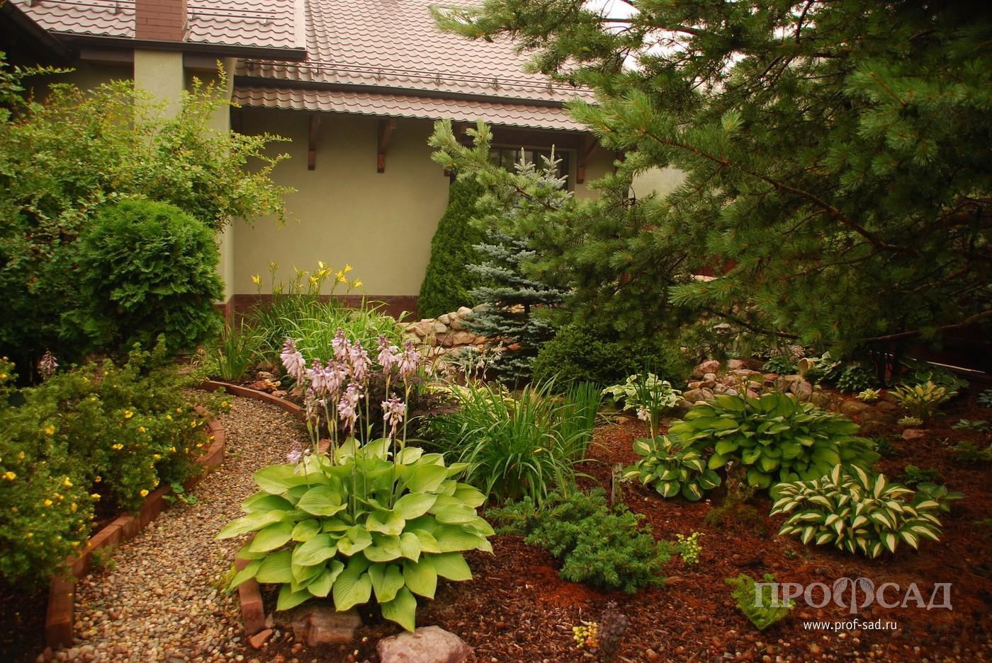 Хосты в саду дизайн